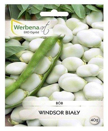 Bób  Windsor Biały (Vicia faba L.) 40g