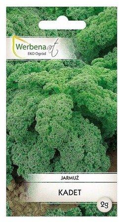 Jarmuż  Kadet (Brassica oleracea L.) 2g