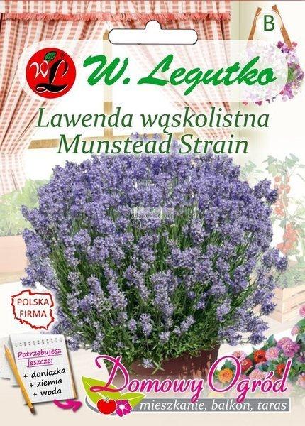 Lawenda wąskolistna Munstead Strain (0,2 g) - Domowy Ogród