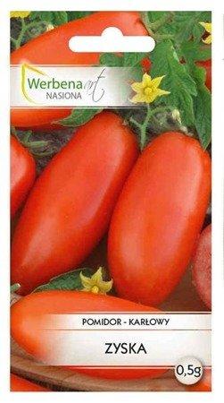 Pomidor karłwoy Zyska 0,5 g