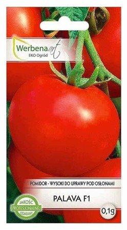 Pomidor wysoki pod osłony Palava mieszaniec (Lycopersicon esculentum Mill) 0,1g
