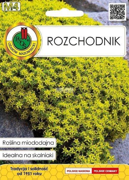 Rozchodnik (0,2 g) - Roślina Miododajna