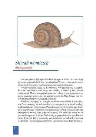 Ślimaki - prof. S. Ignatowicz