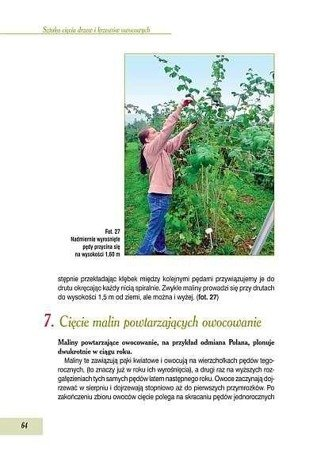 Sztuka cięcia drzew i krzewów owocowych