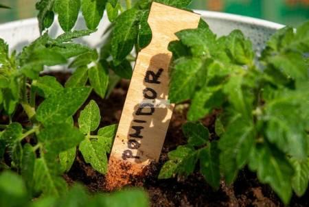 Znacznik do nasion, roślin rabatowych, doniczkowych, bylin, ziół - typ I (1 szt.)